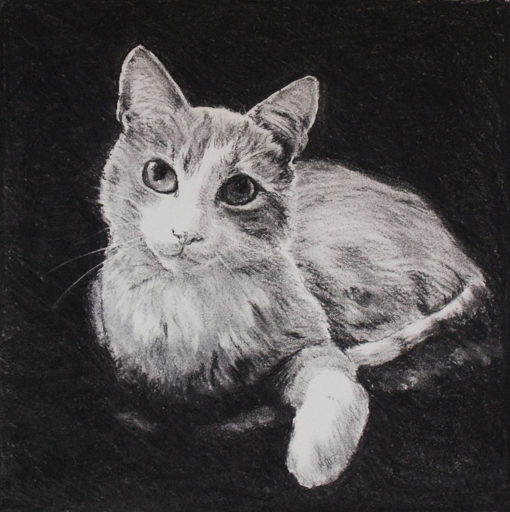 Cat portrait, 2009